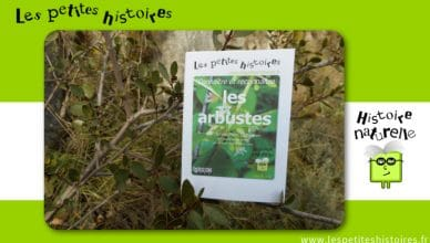 Connaitre et reconnaitre les arbustes