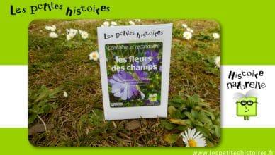 Connaitre et reconnaitre les fleurs des champs