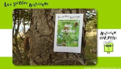 Connaitre et reconnaitre les arbres