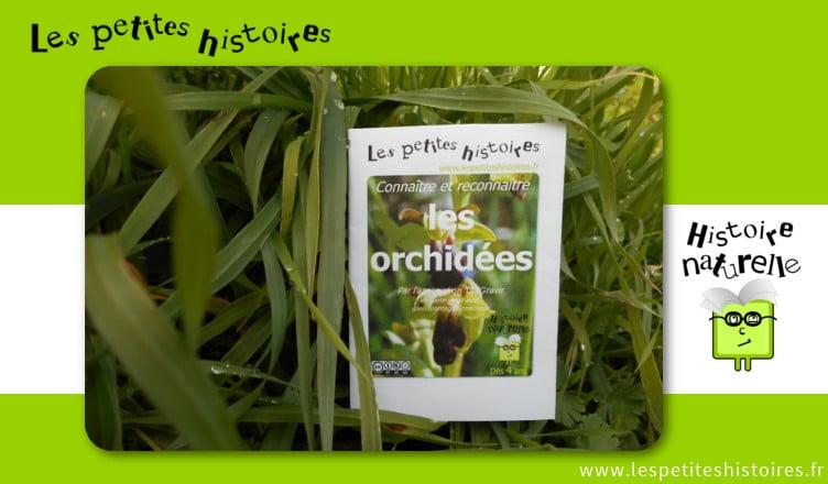 Connaitre et reconnaitre les orchidées